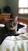 Tiger Lily is looking for her forever home! * Free