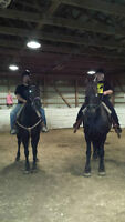 Offering Horse backing Riding lessons ! Children or Adult!