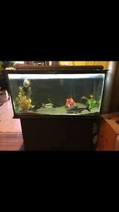 80 gallon tank and stand  Belleville Belleville Area image 1