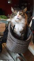 Sac de transport NEUF pour petit chien, chiot ou chat