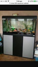 Roma 125 fish tank
