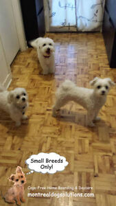 *FULL FOR HOLIDAYS* HAPPY LITTLE DOGS HOME DAYCARE SINCE 2010 West Island Greater Montréal image 7