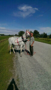 Horse riding club, Saddle up Looking for a few good men or women Sarnia Sarnia Area image 8