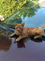 Free male cat 1 year old needs a forever home!!!