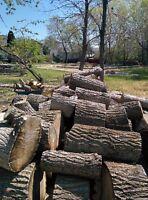 firewood cottonwood large rounds