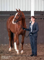 Lovely selection of Warmbloods for sale!