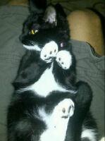 Free Black Cats Kijiji Toronto Ontario