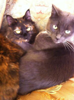 Two Cats Looking For A Forever Home-Together or Separate