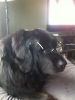 JM Millwright & Electrician- Are you smarter than this dog?