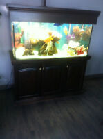 Aquarium 90 Gallons (eau douce)
