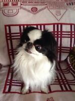< < Responsable doggy care in my home >>