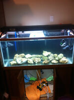 75 gallon aquarium/fish tank /saltwater and accessories