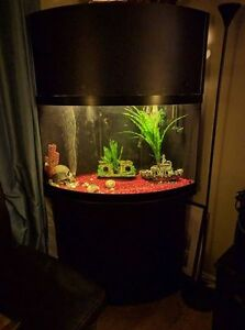 Corner fish tank kijiji free classifieds in ontario for Corner fish tank for sale