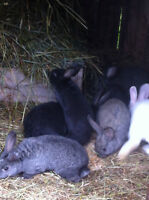 4 Month Old Rabbits