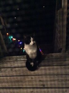 Found black and white cat