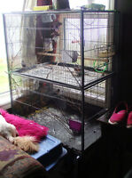 Flight cage  $100.00 or trade for dog kennel