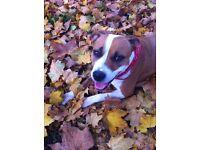 Dog walker/ home boarding