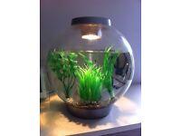 Biorb 30ltr fish tank