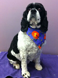 The Bow Wow Grooming Boutique with over 26 years experience London Ontario image 5
