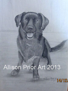 Learn how to draw Animals St. John's Newfoundland image 6