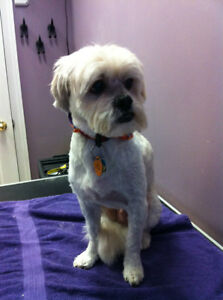 The Bow Wow Grooming Boutique with over 26 years experience London Ontario image 6