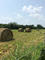 FIRST CUT ROUND BALE HAY 5X4 FOR SALE