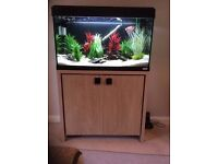 Fluval Roma 125 marine tropical cold water fish tank aquarium with setup (delivery / instal )