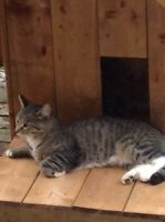 Found small male Tabby