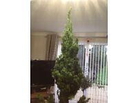 6ft Green life like Christmas tree