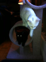 FREE CATS TO GOOD HOME