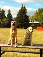 Tired Pups: Dog Walking Services in SW Calgary