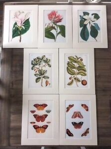 $10 each ----Art prints with matt border. ready for framing. Mornington Clarence Area Preview