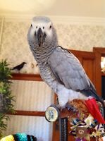 Do you have experience with looking after medium sized parrots?