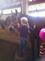 Riding Lessons and Boarding in Quiet Atmosphere