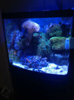 BIOCUBE AQUARIUM 14 GALLONS SALE