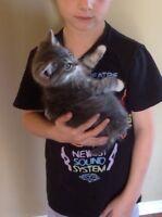 Barn kitten - great mouser