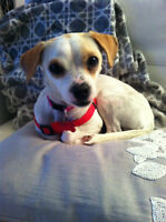 Volunteer needed to help run a small dog rescue