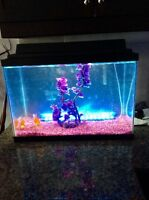 Aquarium 20 gallons avec poisson inclus