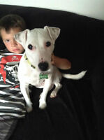 Playful Jack Russell needs forever home