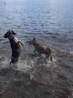 4 Paw Drive offering Dog Exercise Services
