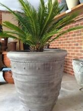 Large Planters for Sale Keysborough Greater Dandenong Preview