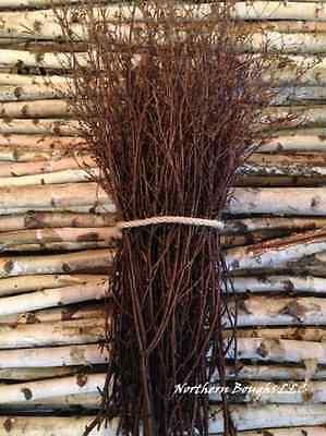 100 Decorative White Birch Branches
