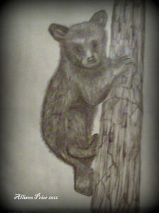 Learn how to draw Animals St. John's Newfoundland image 2