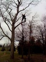 Tree Removal and Maintenance. Lawn care services
