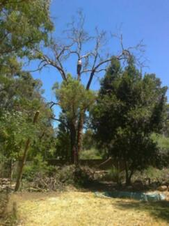ADKINS TREE LOPPING & PALM PRUNING ALL AREAS - CHEAP PRICES!! Bullsbrook Swan Area Preview