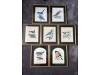 7 lovely framed garden birds prints by David Andrews