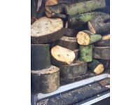 Large quantity of logs