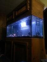 Great condition fish tank for sale,750OBOneed gone,starting fam!