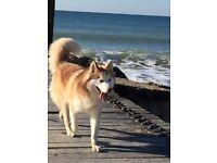Coastal K9. Dog Walking and Day Care
