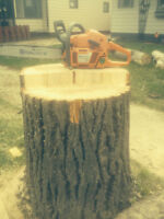 TREE SERVICE/ REMOVAL / PRUNING / STUMPING